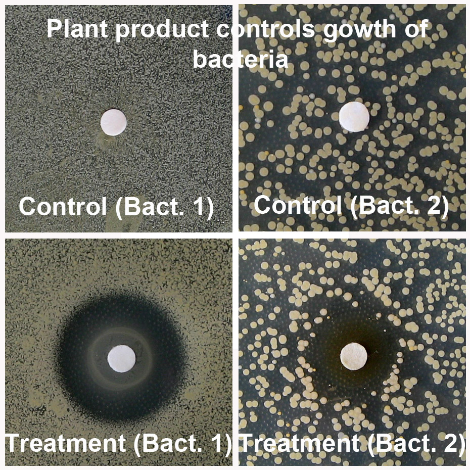 Figure_5_control of bacterial growth_flat